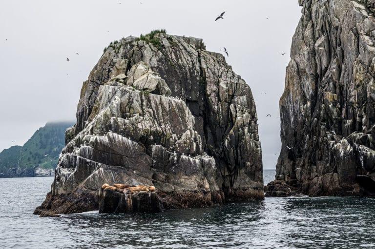 Take a Kenai Fjords tour in Seward