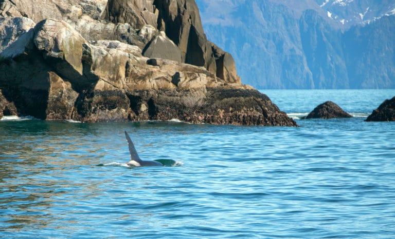 6 reasons to visit Exit Glacier in Seward
